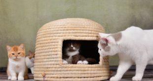 Katzenkorb Neko Chigura