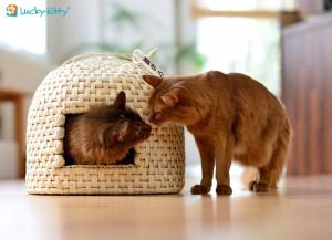 Neko-Chigura Katzenkorb