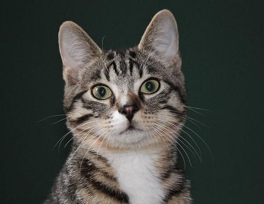 Clickertraining mit Katzen