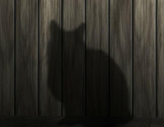 Katze unsauber