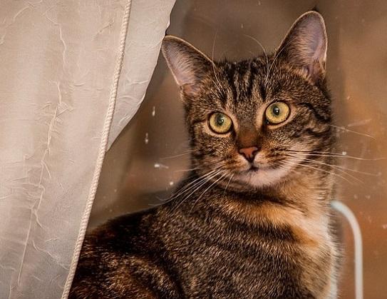 Katze zerkratzt Moebel