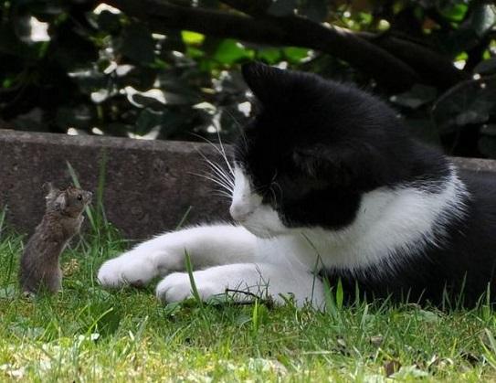 Rattengift Katze
