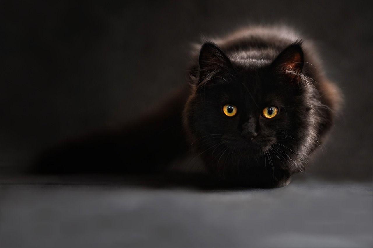 Katzenfototipps