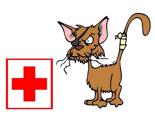 Notfallapotheke Katze