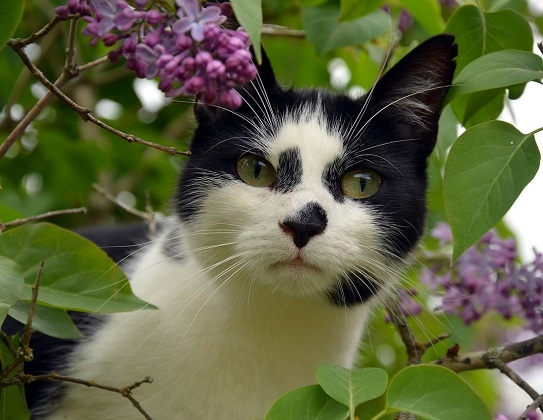 Katze Freilauf Vorbereitung