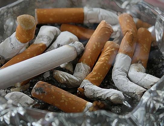 Zigarettenrauch Katzen