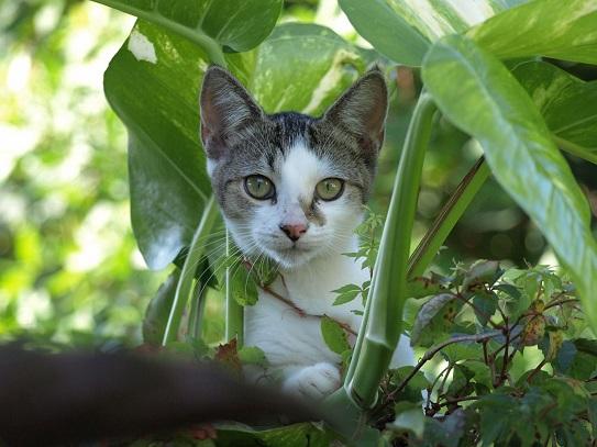 katzengerechter Garten