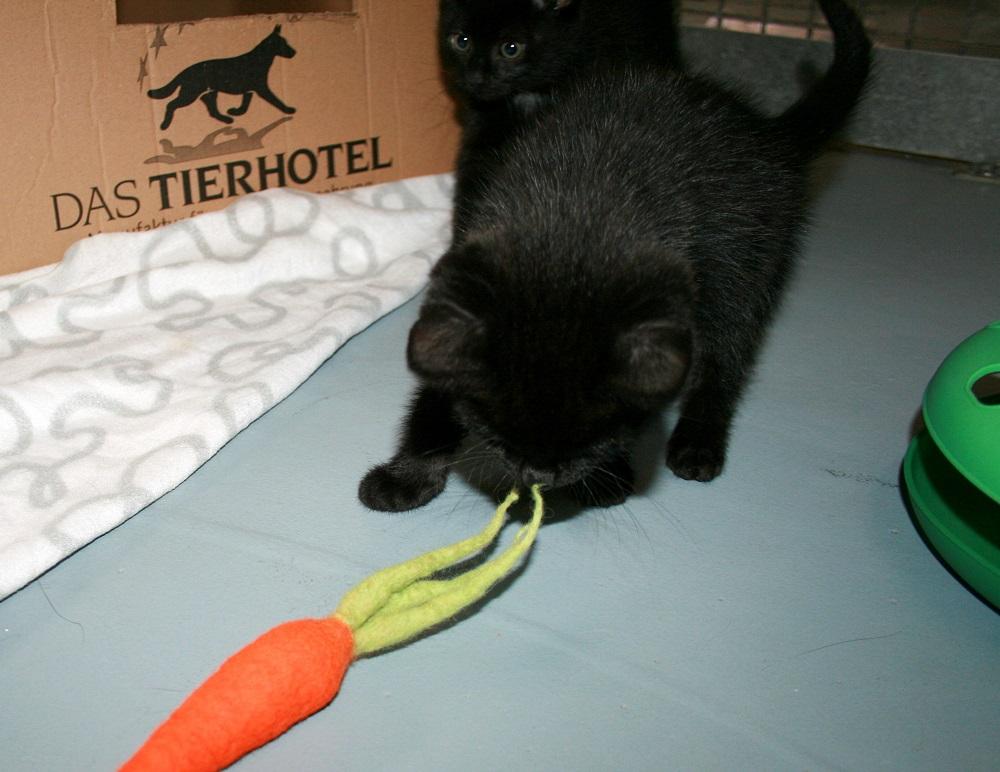 Filzspielzeug Katze