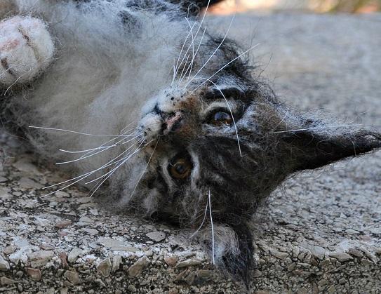 Katze aus Filz