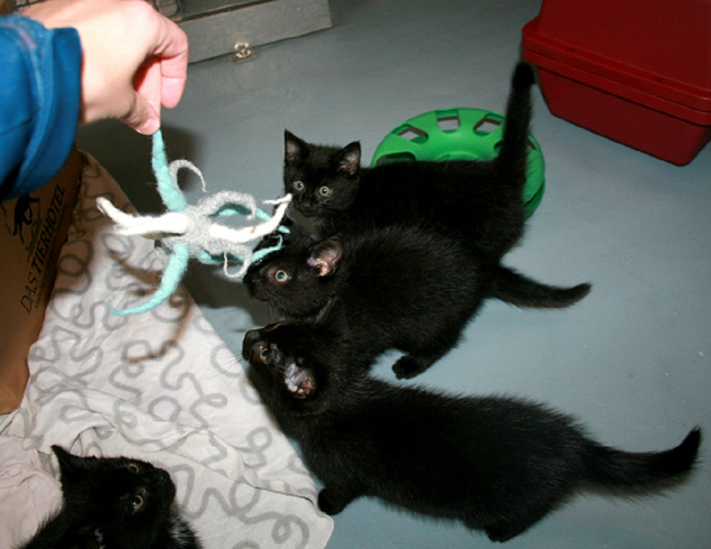 Katzenspielzeug aus Filz