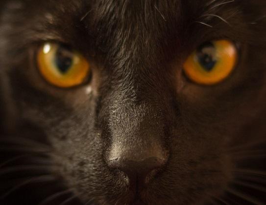 Herr der Ringe Katze