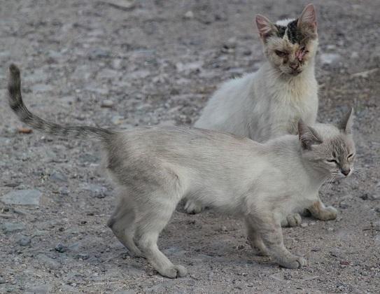 Katzenseuche