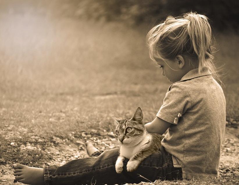 katzenliebe zu menschen