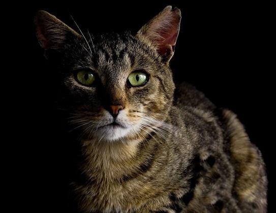 chronische Niereninsuffizienz Katze