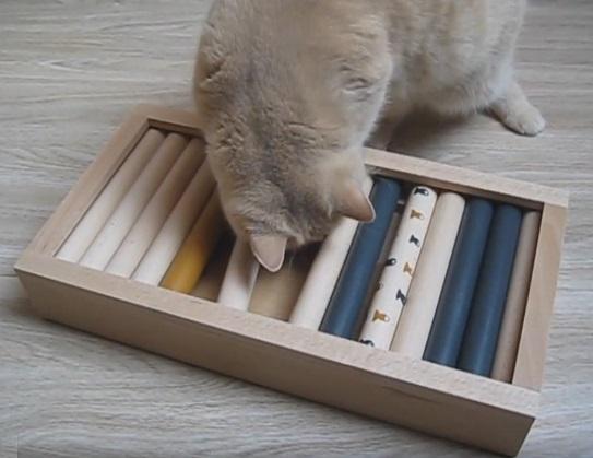 Futter Intelligenzspiel Für Katzen Selber Bauen Katzenblogde