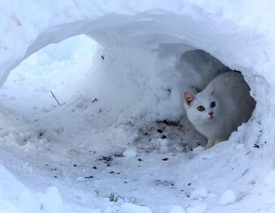Streunerkatzen helfen im Winter