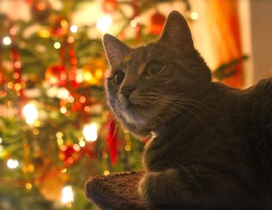 last minute weihnachtsschn ppchen f r katzen und ihre halter interessantes f r. Black Bedroom Furniture Sets. Home Design Ideas