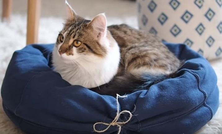 DIY Katzenkuschelkoerbchen