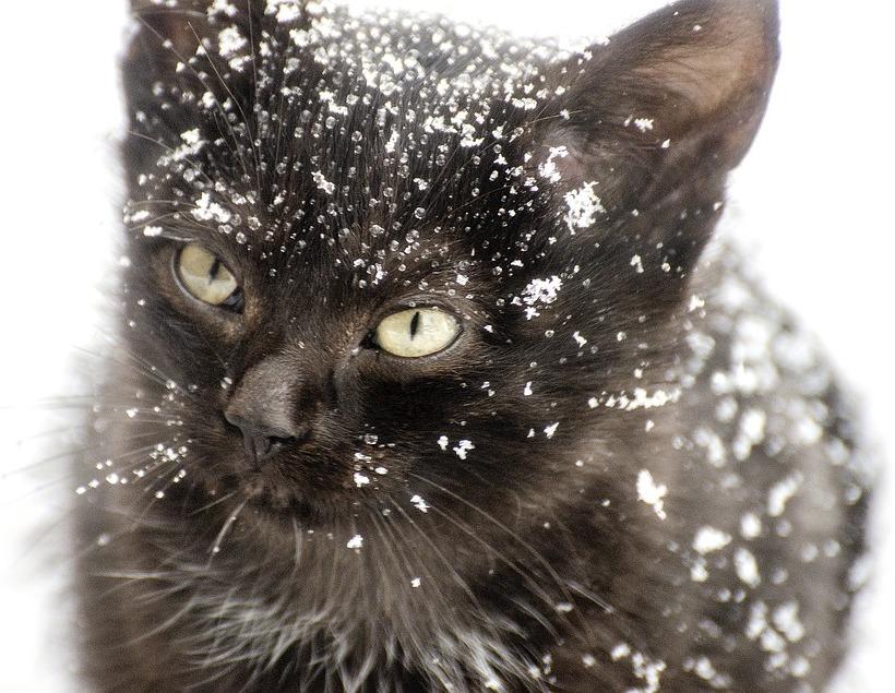 Katzenfutter friert ein