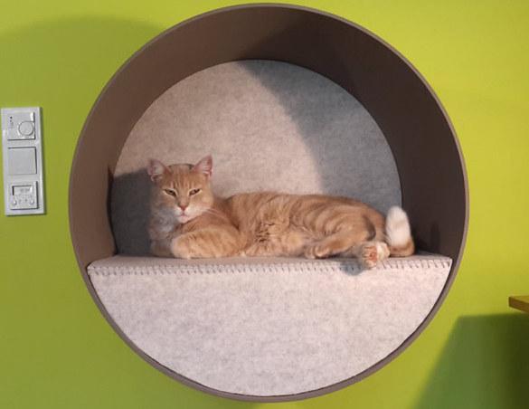 Katzenmoebel-Cats-Lounge