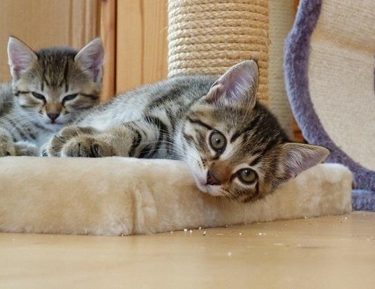 Katzenvermehrer erkennen