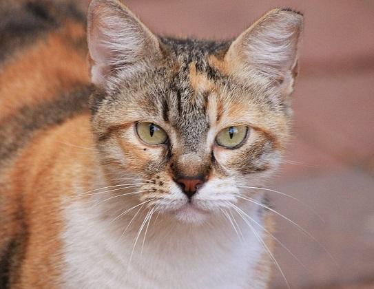 Nierenerkrankung der Katze