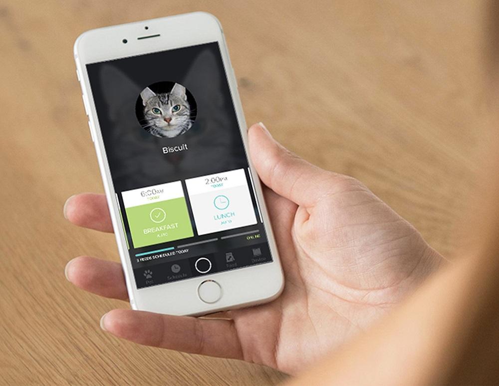 Smarthphone Futterautomat Katze