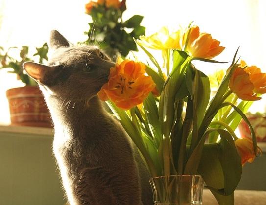 Giftige Frühlingsblumen für Katzen