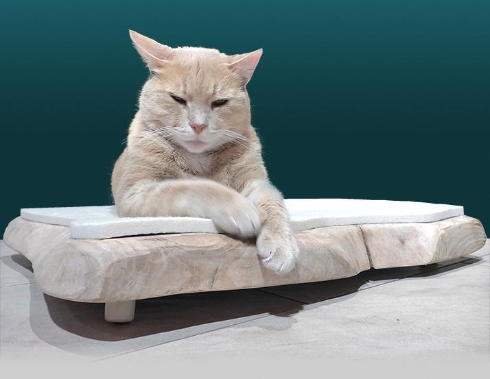 Katzenbett aus Holz
