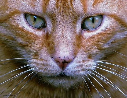 Schnurrhaare Katze