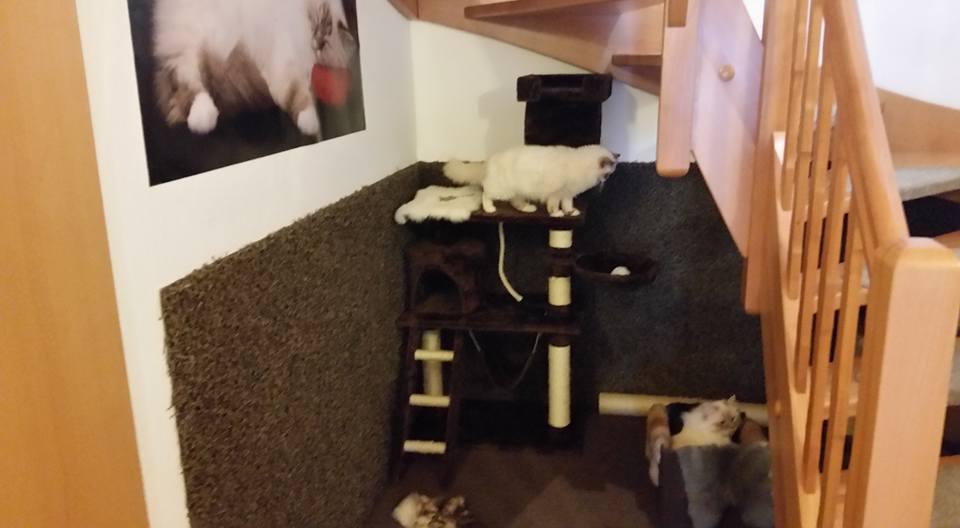 Wohnung fuer Katzen