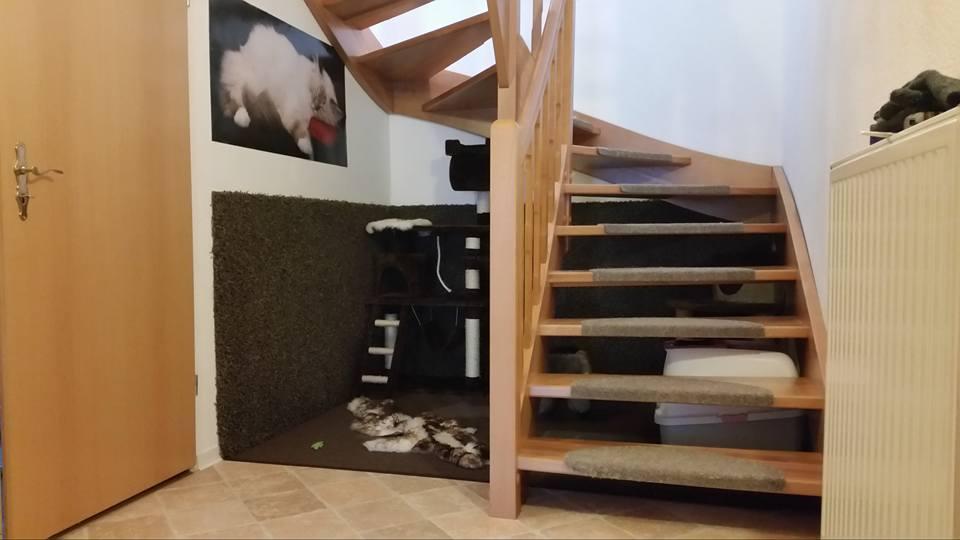 diy katzenparadies aus ungenutztem wohnraum interessantes f r katzenfreunde. Black Bedroom Furniture Sets. Home Design Ideas