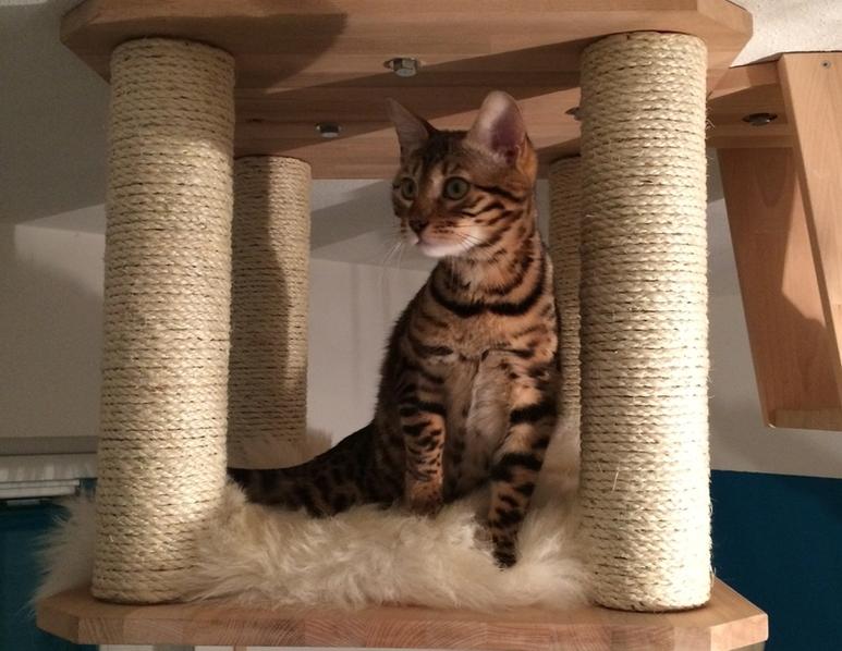 Katzen-Deckenliegeplatz