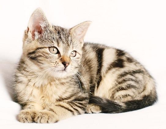 Trennung mit Katze