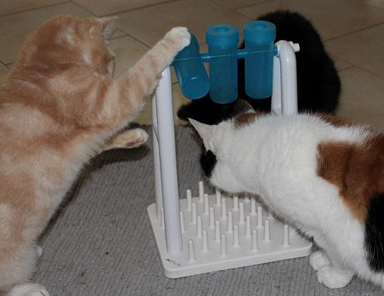 Katzenspielzeug Test