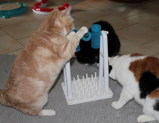 Katzenspielzeug cat activity