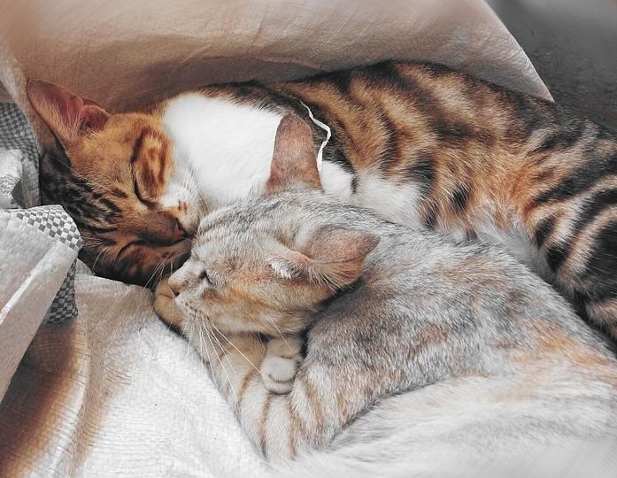 Katze und Kater zusammen halten