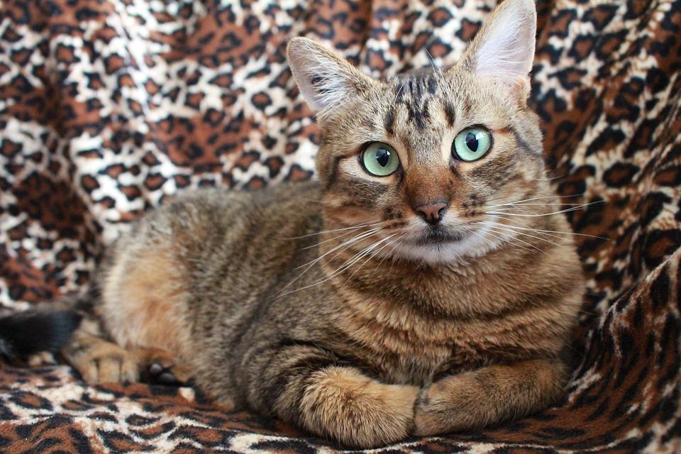 Katzenhaltung Und Mietrecht 4 Fakten Die Katzenhalter Kennen