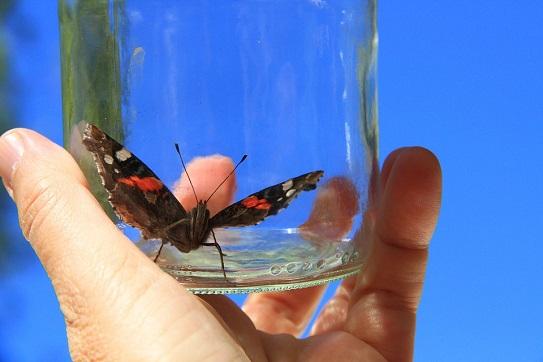 Katzenspielzeug Schmetterling im Glas