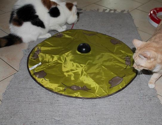 Maeusejagd Katzenspielzeug