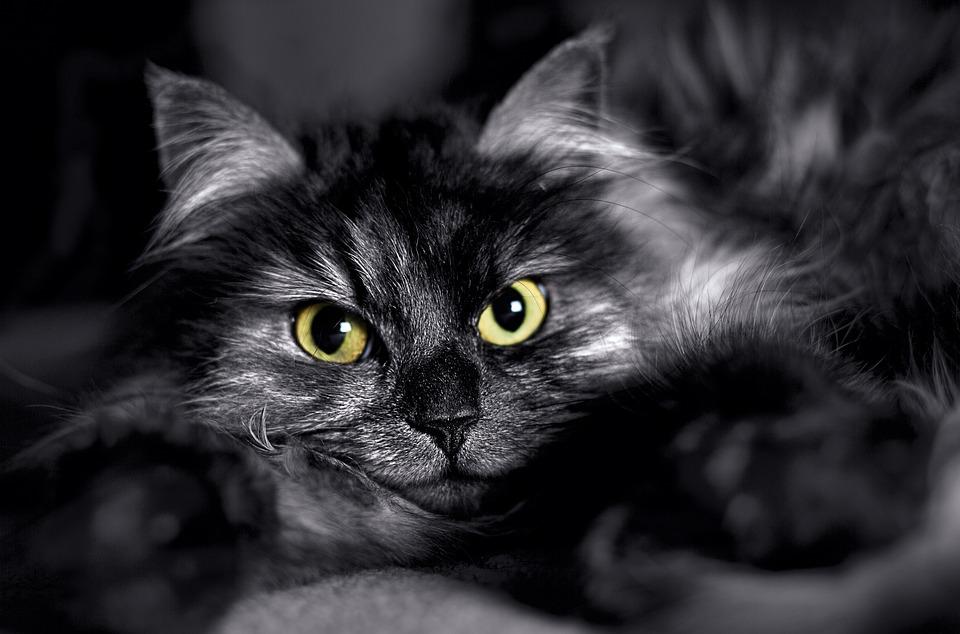 schwarze Katze blackcatproject