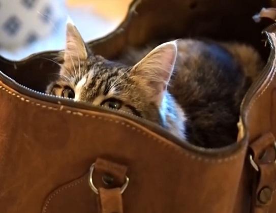 diy katzenbett aus einer tasche selbst gemacht interessantes f r katzenfreunde. Black Bedroom Furniture Sets. Home Design Ideas