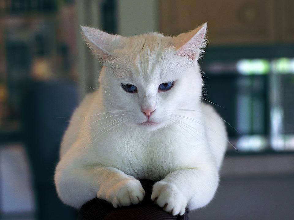 Gefahren Katzenmoebel bauen