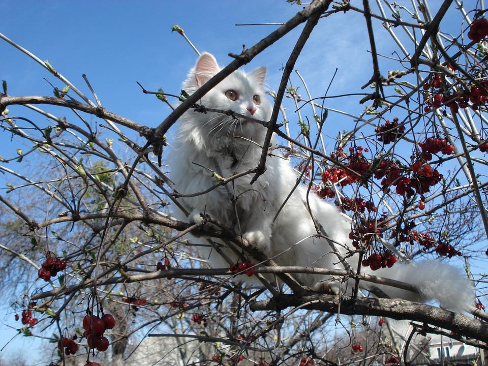 Katze Gesundheit Physiologie