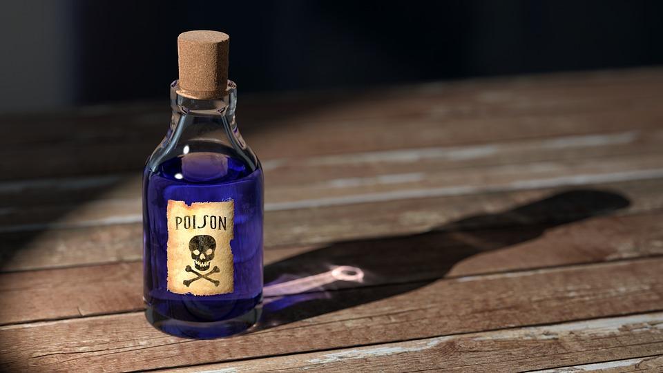 Katzenmoebel giftig