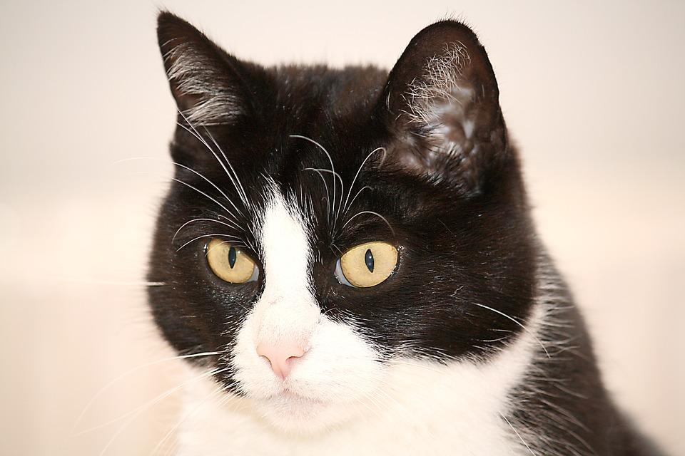 Katzentoilette Stehpinkler Katze