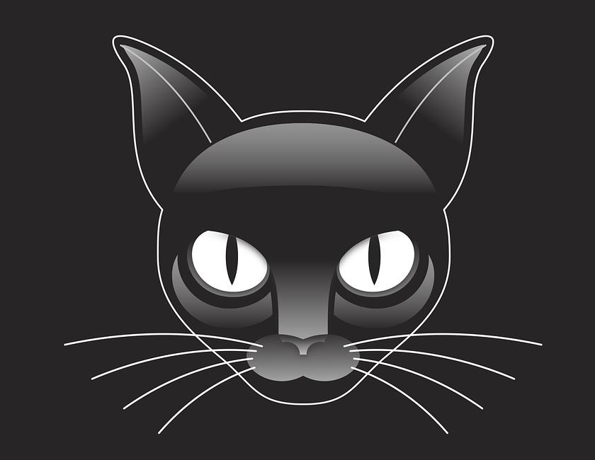 Fehler Katzenhaltung