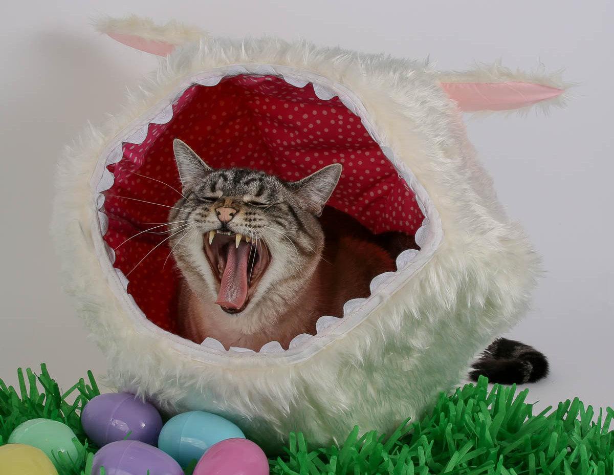 Katzenhoehle Osterlaemmchen