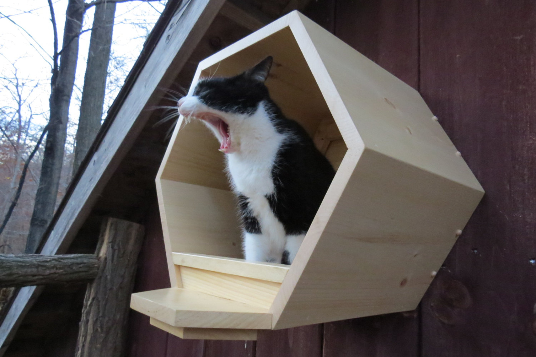 Cat Comb Katzen-Wandhoehle