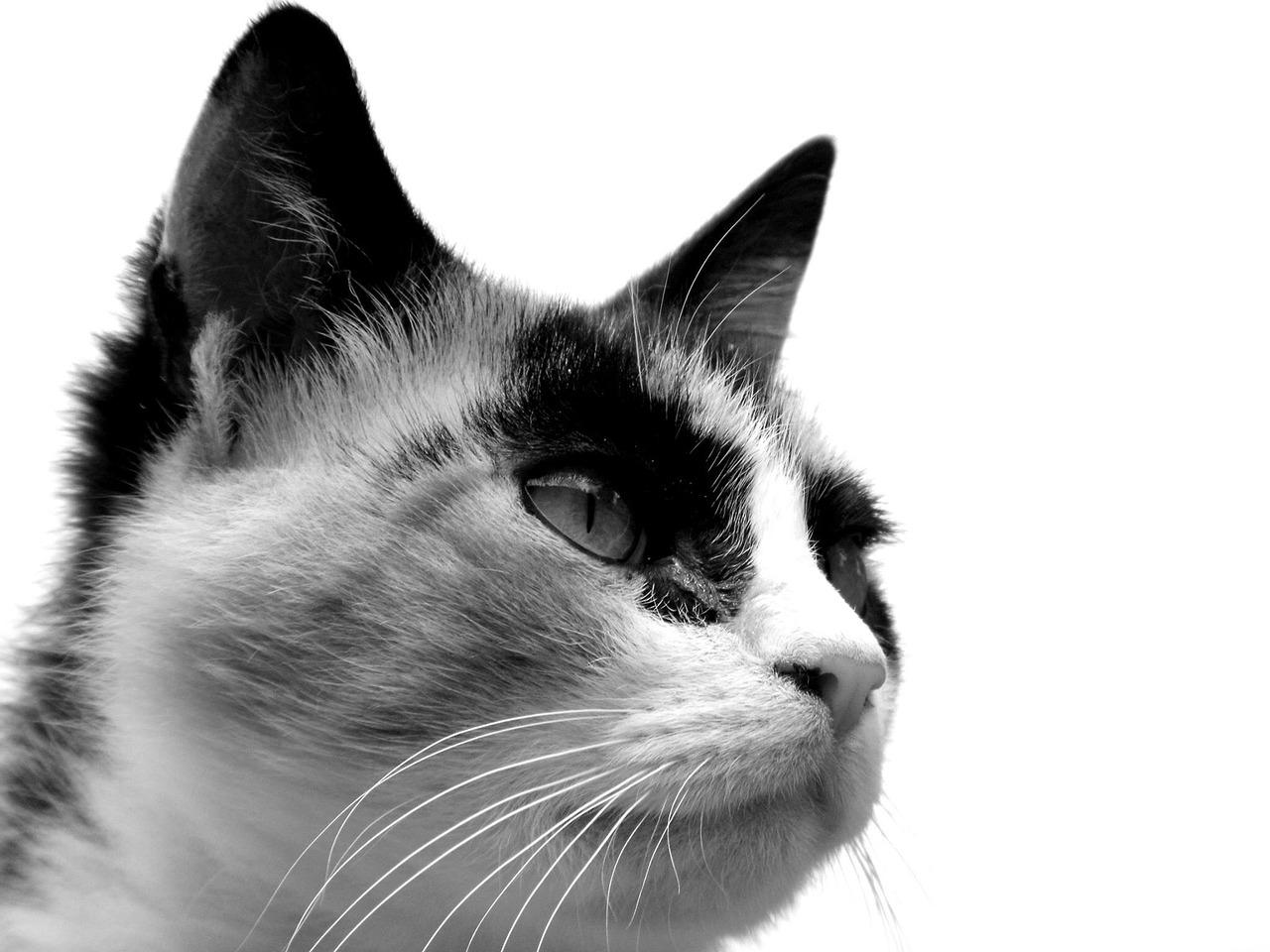 Katzengruppen Gleichgesinnte